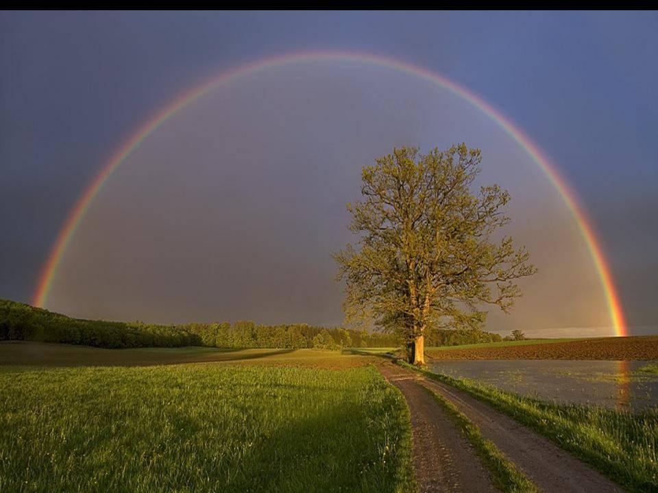 Afbeelding met gras, regenboog, natuur, buiten Automatisch gegenereerde beschrijving