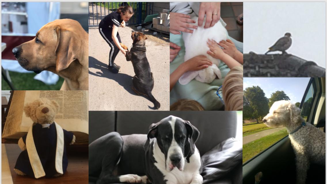 Afbeelding met hond, binnen, foto, zitten  Automatisch gegenereerde beschrijving
