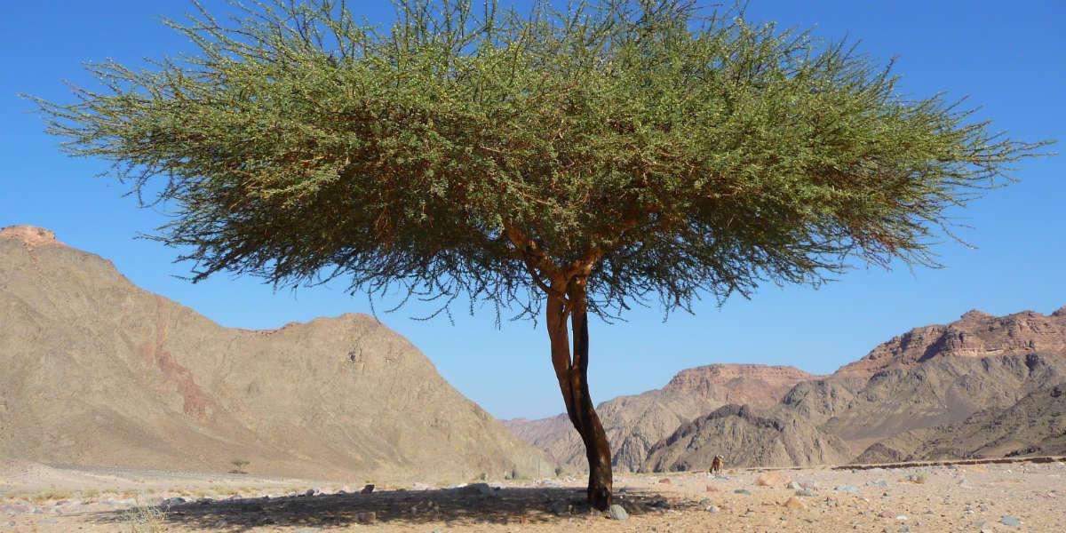 Afbeelding met buiten, berg, gras, giraf Automatisch gegenereerde beschrijving