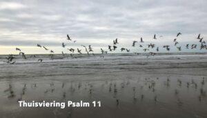 Psalm 11